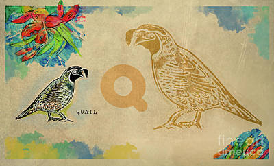 Poster featuring the drawing English Alphabet , Quail by Ariadna De Raadt