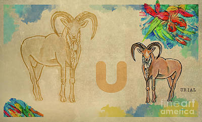 Poster featuring the drawing English Alphabet , Urial  by Ariadna De Raadt