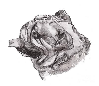 English Bulldog Charcoal Drawing Poster