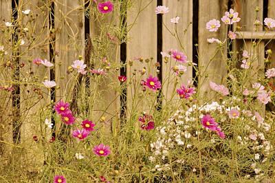 English Garden Poster