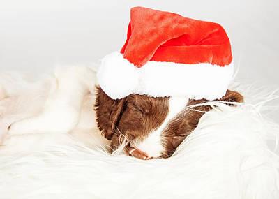 English Springer Spaniel Puppy Wearing Santa Hat While Sleeping Poster by Susan Schmitz