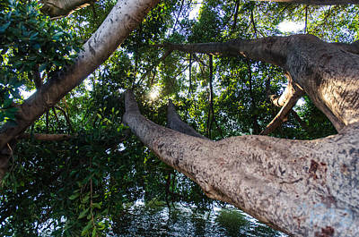 Enjoying Nature Poster