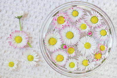 Enslish Daisies In A Jar Poster