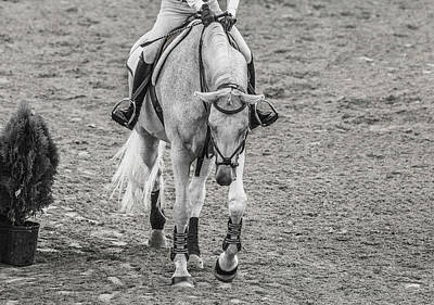 Equestrian Graceful Gray Poster