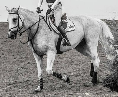 Equestrian The Attentive Gray Poster