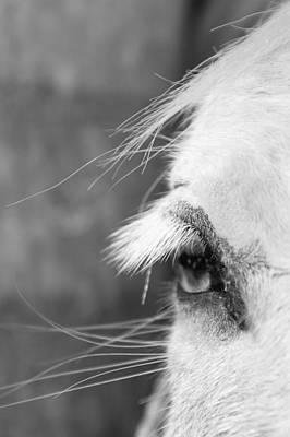 Equine Eyelashes Poster