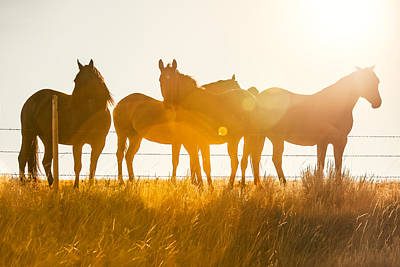 Equine Glow Poster by Todd Klassy