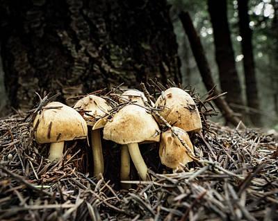 Erupting Mushroms Poster