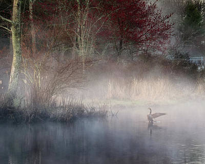 Poster featuring the photograph Ethereal Goose by Bill Wakeley