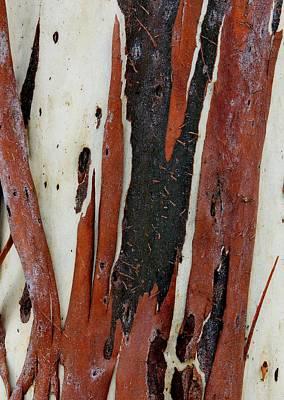 Eucalyptus Bark Abstract 2 Poster