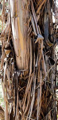 Eucalyptus Bark - Australia Poster
