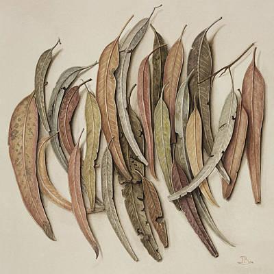 Eucalyptus Leaves Poster by Jenny Barron