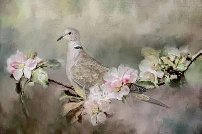 Eurasian Dove In The Garden Poster by Jai Johnson