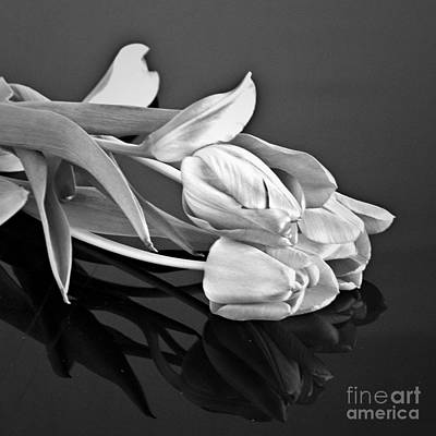 Even Tulips Are Beautiful In Black And White Poster by Sherry Hallemeier