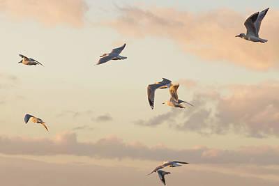 Evening Gulls Poster