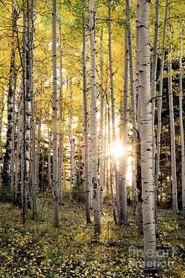 Evening In An Aspen Woods Vertical Poster