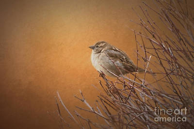 Evening Sparrow Song Poster