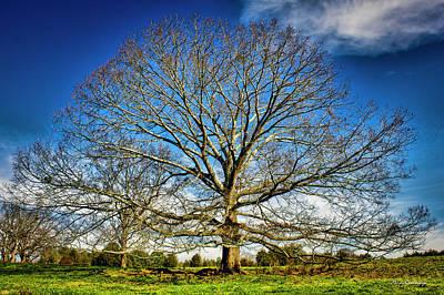 Ever Expanding 2 Field Red Oak Tree Art Poster