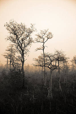 Poster featuring the photograph Everglades Cypress Stand by Gary Dean Mercer Clark