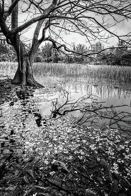 Everglades Reflections Black And White Poster by Debra and Dave Vanderlaan