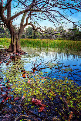 Everglades Reflections Poster
