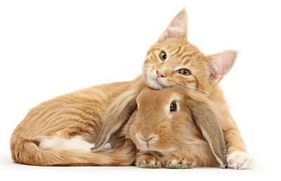 Everybody Needs A Bunny For A Pillow Poster