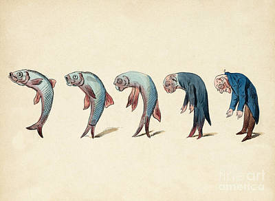 Evolution Of Fish Into Old Man, C. 1870 Poster by Wellcome Images