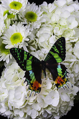 Exotic Green Butterfly Poster