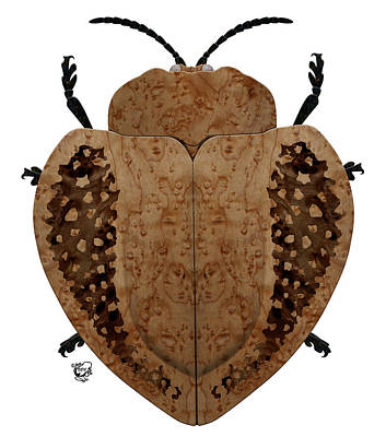 Exotic Wood Tortoise Beetle Poster by Stephen Kinsey