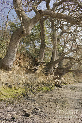 Exposed Roots At Low Tide Poster by Terri Waters