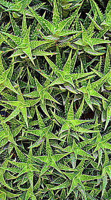 Poster featuring the photograph Expressionalism Aloevera by Aimee L Maher Photography and Art Visit ALMGallerydotcom