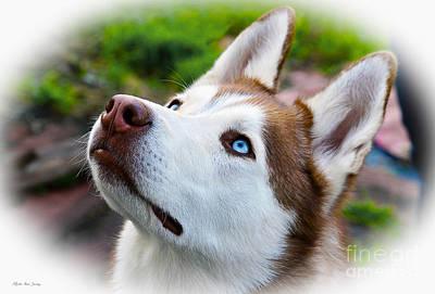 Expressive Siberian  Husky Photo C62017 Poster