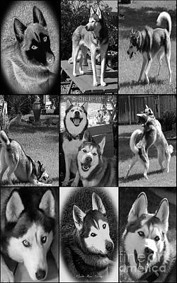 Expressive Siberian Huskies Collage C4517 Poster by Mas Art Studio