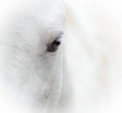 Eye Of The Spirit Horse Poster by Brent Davis