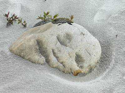 Face In The Sand At Baird Glacier Outwash Poster