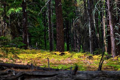 Cascade Mountain Range Fading Ferns Poster