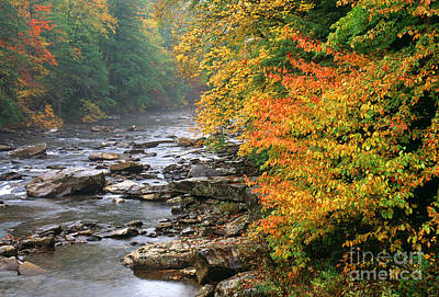 Fall Along The Cranberry River Poster