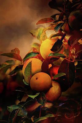 Fall Apples A Living Still Life Poster