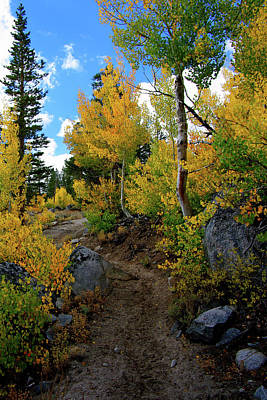 Fall Aspens In The Eastern Sierra Poster