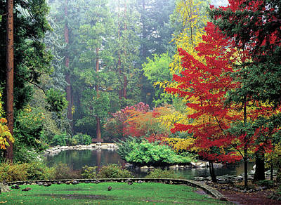 Fall At The Upper Duck Pond Poster