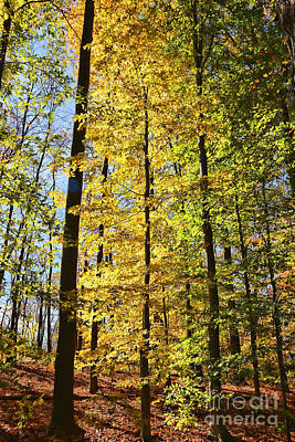 Fall Color Cuyahoga Valley National Park 2259 Poster