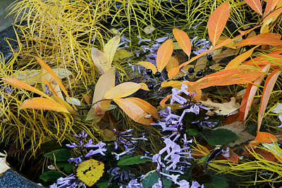 Poster featuring the photograph Fall Color Soup by Deborah  Crew-Johnson