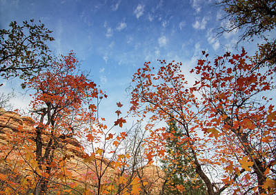 Fall Colors Along West Fork Trail Poster by Kunal Mehra