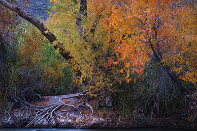 Fall Colors At The Salt River Poster