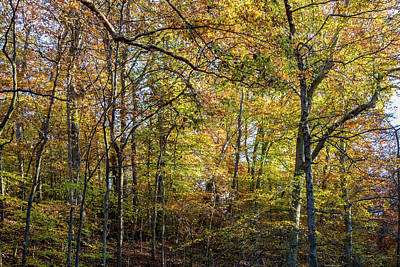 Fall Colors Of Rock Creek Park Poster