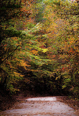 Poster featuring the photograph Fall Colors On The Trail by Shelby Young