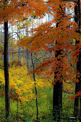 Fall Colors Watercolor Poster