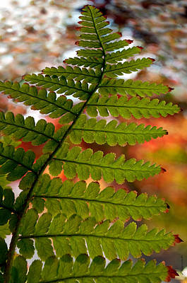 Poster featuring the photograph Fall Fern by Gwyn Newcombe