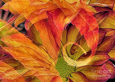 Fall Floral Composite Poster by Janice Drew
