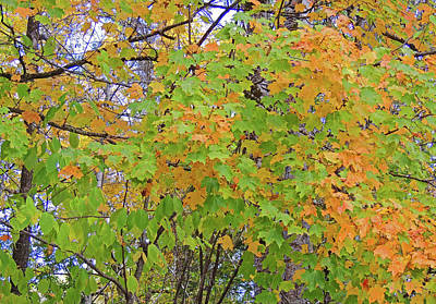Fall Foliage In The Smokies Poster